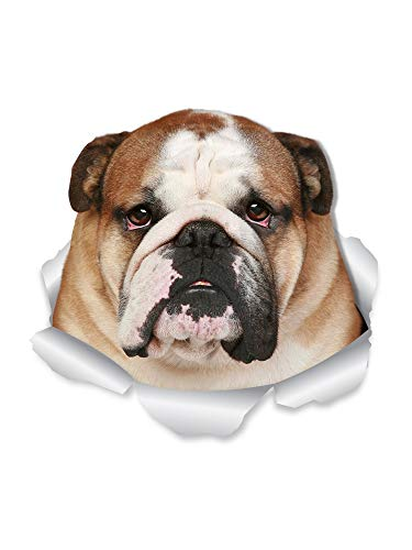 Winston & Bear Funny Bulldog Wall Decals - 2 Pack – English Bulldog 3D Sticker Dog Decals for Walls, Cars, Toilet and More - Retail Packaged British Bulldog Gifts