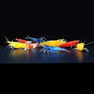 【BeeQuest】ルリー&チェリーシュリンプ バラエティーセット 10匹+補償1匹と稚エビ少々(飼料3品付き)[生体] …