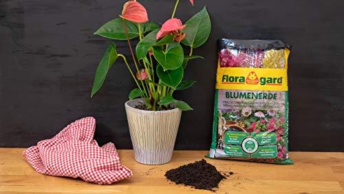 Floragard Blumenerde 5 L – für Balkon-, Kübel- und Zimmerpflanzen – mit Langzeitdünger - 2