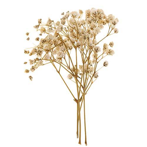 3 x echte baumwollzweige 12 Blüten ca 65 cmGossypium  Dekozweige Trockenblume