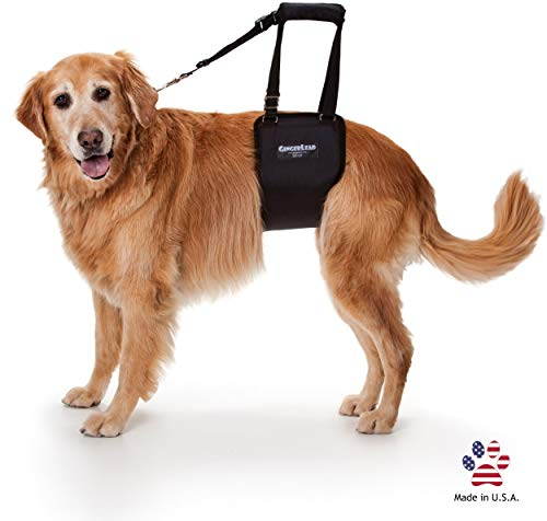 GingerLead Dog Support & Rehabilitation Harness - Large Female Sling; Help Older or Handicapped Pets with Balance or Mobility; Canine Cruciate Ligament Recovery Aid, CCL/ACL Injury, Hip Dysplasia