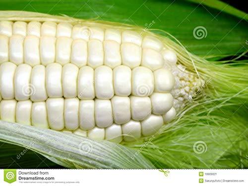 Weisser Mais - Zuckermais - 20 Samen - sehr süßer asiatischer Maissamen