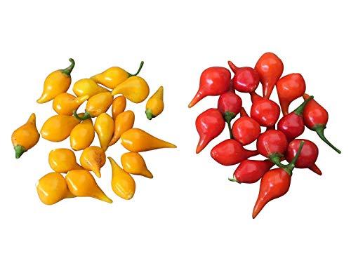 Biquinho MIX 20 Samen -Der Mini Chili ohne Schärfe- Tolle Fruchtform