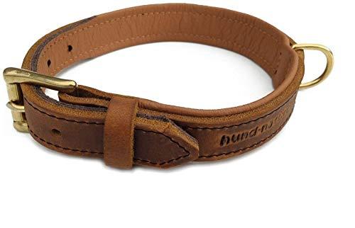 Lederhalsband für Hunde hellbraun cognac, gefüttert Messing Halsband aus Fettleder (35 (Halsumfang 25cm - 29cm))
