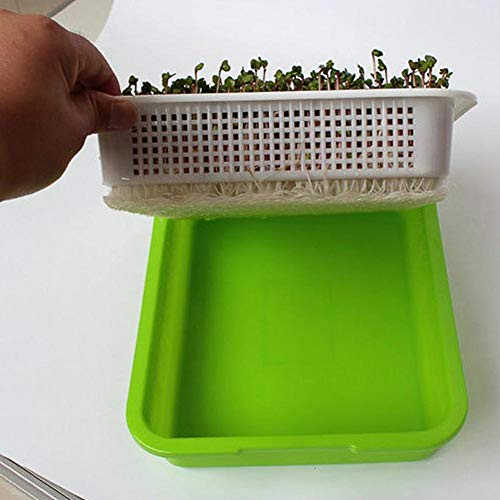 Easy-topbuy Keimschale Mit Deckel, Keimkasten Eindicken Weizengras-Züchter, Der Bohnen-Anbautabletts Pflanzt Pflanzenwaschbecken 32,5x26x11,5cm