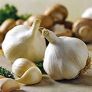 SNOW HILL HIMALAYAN ORGANIC GARLIC BULB GROW ON HIGH ALTITUDE (15 PACK), FRESH HIMALAYAN GARLIC BULB FOR SPICES & HEALTH BENEFIT PLUS PLANTING AND GROWING YOUR OWN GARLIC - PRODUCT OF HIMALAYAS, NEPAL