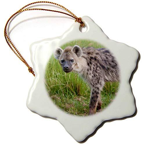 Kysd43Mill Hyena Wildlife Aberdare Parque Nacional Kenia AF KSU Keren Su Adornos...