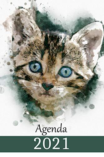 Agenda 2021: Diario settimanale 2021- 12 mesi da gennaio a dicembre – ottimo regalo per donna e uomo - Bel Micio dagli occhi blu