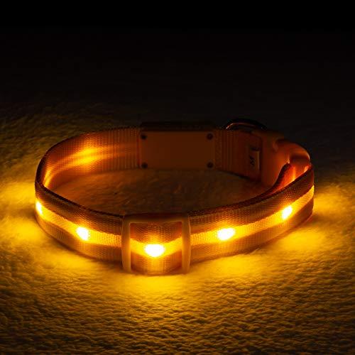Blazin' Bison Collar de Seguridad LED para Perro, Recargable por USB, con luz Intermitente Resistente al Agua
