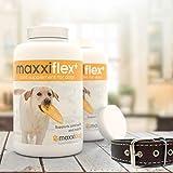 Gelenk-Ergänzungsfutter für Hunde – MaxxiFlex Plus – Hunde Gelenke – Fortschrittliche Formel – Glucosamin HCL, Chondroitin-Sulfat, MSM, Hyaluronsäure, Teufelskralle, Bromelain, Gelbwurz – Linderung Von Arthritisschmerzen – Beste Hüftunterstützung Für Hunde – Hunde-Hüftdysplasie – Alle Rassen Und Größen – 120 Hochwertige Kaubare Tabletten – Geschmacksgarantie - 9