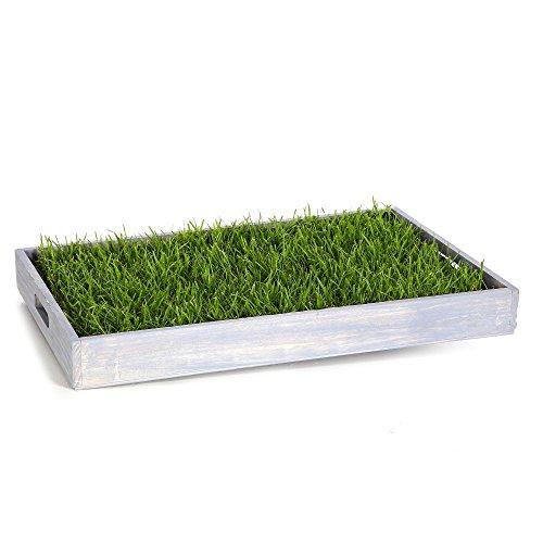 Miau Katzengras inklusive Dekotablett'Sky Blue'   60x40cm echtes, saftiges Gras   sofort nutzbar - kein aussäen  (Sky Blue)