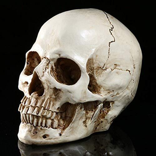 zzzddd Escultura De Escritorio,Cabeza Cráneo Artificial Esqueleto Resina Jefes Cráneo Escultura Figura Coleccionable Inicio Bar Pub Halloween Cráneo Decoración