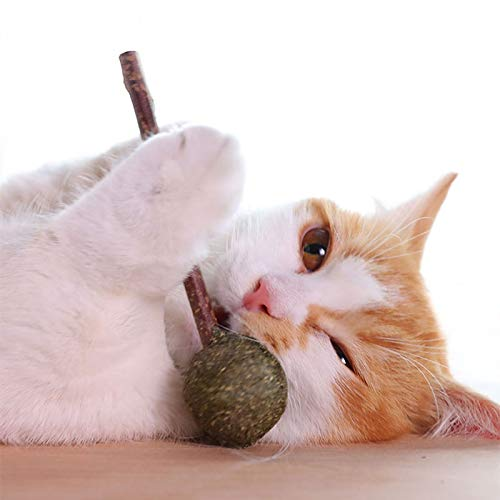 YUXIN Zhochen Los Dientes del Gato Mascota Limpia Menta Menta Menta Lollipop de mascar Caramelo Bola del Juguete Tease Orgánica de Plata Rota Palo Gatito Alimentos (Color : Cinza, Size : S)