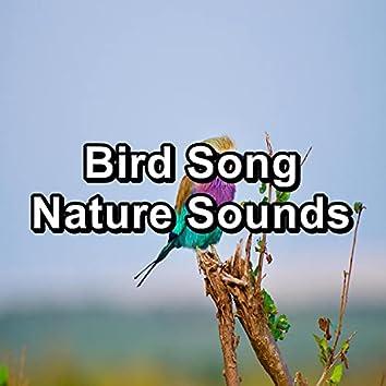 Bird Song Nature Sounds