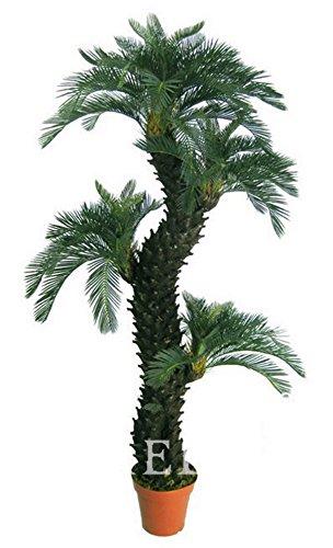 10 pcs sac, graines Dracaena, balcon en pot, les saisons de plantation, fragrans Dracaena, # 08OC38