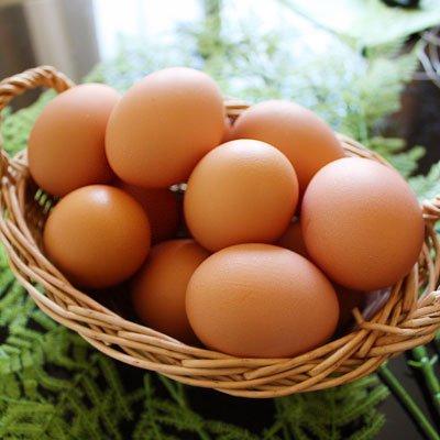 【北海道十勝 くさなぎ農園】北海道産100%自家配合飼料 平飼い朝採り 有精自然卵160個(割れ保証16個含む)