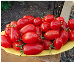 Juliet Tomato Seeds - Rare Hybrid of Plum and Roma Tomatoes - Marde Ross & Company
