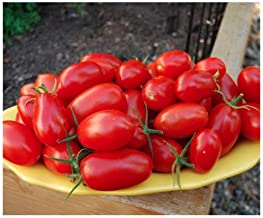 santa tomato seeds