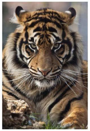 Diy 5D Kits De Pintura De Diamantes Tiger King Animal Bordado Imagen Artes Mosaico De Diamantes De Imitación Para La Decoración De La Pared Del Hogar Regalo Completo Taladro Redondo Mano 50X60Cm