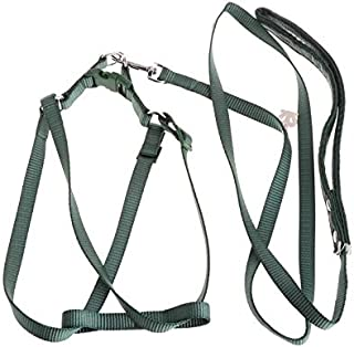 VONUTU Parrot Bird Leash Outdoor Adjustable Harness Training Rope Anti Bite Flying Band - Look Trapeze Pack Grey Bells Calcium Outside Metal Small Stairs Shredder Natural Macaw Sale