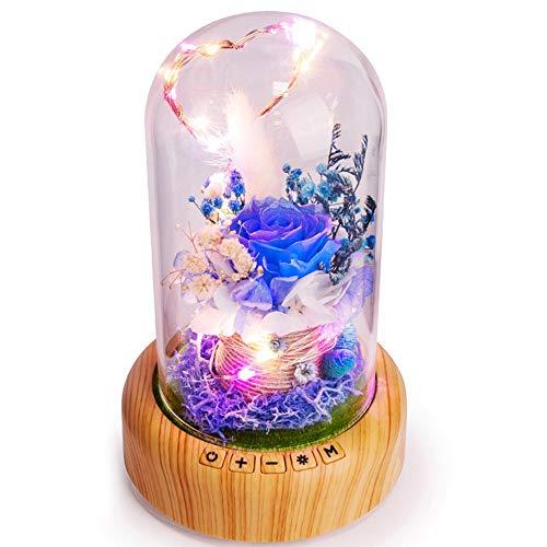 Ruitx Rosa llevó la lámpara de la Botella. Encantada Rosa en la...