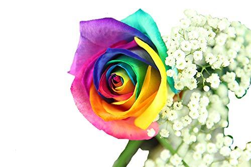 Regenbogen Rose Deluxe - inklusive gratis Kultvase - z.B. Highlight als Überraschung, Gesundheit, Danke, Geburtstag