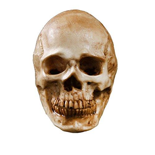 MagiDeal Modèle Crâne Humain Statue Figurine Décoration Jaune Antique