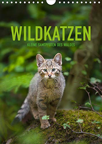 Wildkatzen - Kleine Samtpfoten des Waldes (Wandkalender 2021 DIN A4 hoch)