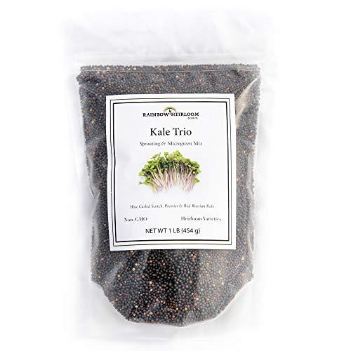 Kale Trio Sprouting & Microgreen Mix