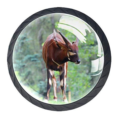 Perillas de Gabinete Redondas Animal marrón Perillas de Cajón 35mm Tiradores de Muebles con Tornillo Perillas Manijas para Armario Cajón Aparador Cocina 4 Piezas