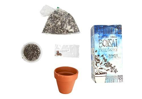Bonsai Tree Garden Kit - DIY grow kit with Japanese Black Pine Tree Seeds: Complete Bonsai Gardening Set - Includes: Care Guide, Bonsai Tree Seeds, Compost Soil, Terr-Cotta Planting Pot