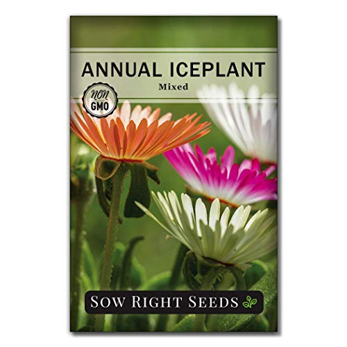Sow Right Seeds - Ice Plant Flower Seeds for Planting, Beautiful Flowers to...