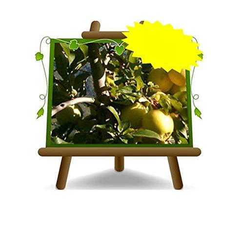 Apfelbaum Äpfel Früchte - Golden...