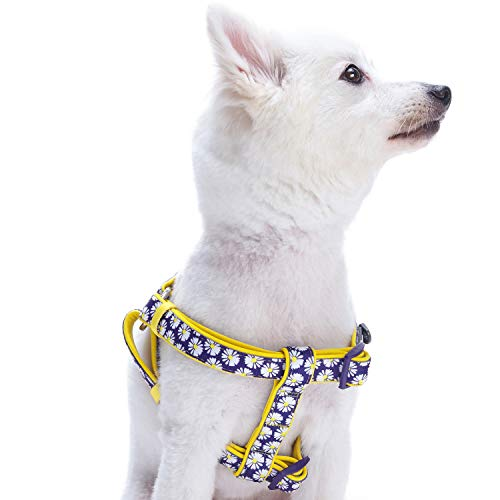 Blueberry Pet 2 Patterns Soft & Comfy Step-in...