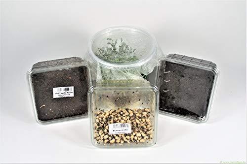 terra2go Erbsenblattläuse, weiße Asseln, Springschwänze, Bohnenkäfer - 4er Set Futtertiere