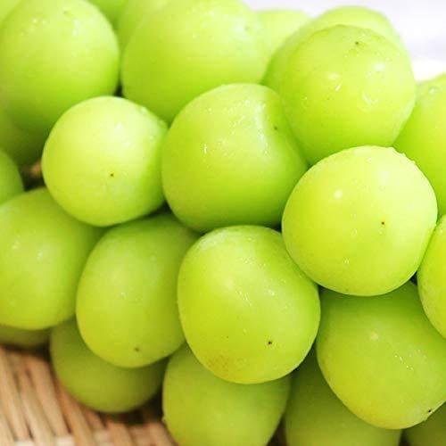 国華園 長野産 ご家庭用 シャインマスカット 2房1箱 産地直送 ぶどう 葡萄