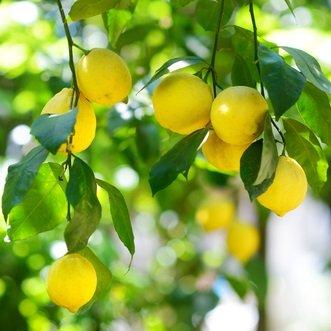 セイミラボラトリー『クーナレモン精油』