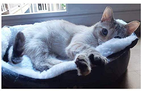 Westeng 1 Stück Ultra-weiche Baumwolle Welpen Nest Katzenbett, Kleine Haustierbett Teddy Kennel waschbar,50 x 40 x 15 cm - 6