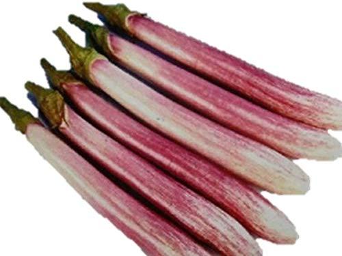 珍しい 紫白長なす 種 6粒