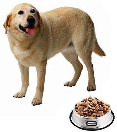 Futternapf für Hunde, die Croods 24Unze Edelstahl Paw Neues Design Hund Schalen mit Gummi rutschfeste Unterseite Lange Haltbarkeit Hund Fressnapf Beautiful Hund Gericht mit Handhabung Loch (Set von 2) - 6