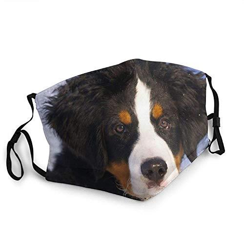 Máscara facial de moda con bolsillo filtrante lavable a prueba de polvo pasamontañas máscara de tela reutilizable para hombres y mujeres-perro de montaña bernesa