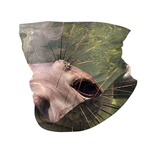 Variety Head Scarf Fashion Face Mask Elephant Seal Baja California Sun-Proof Fashion Bandana Headwear Face towel for Men and Women