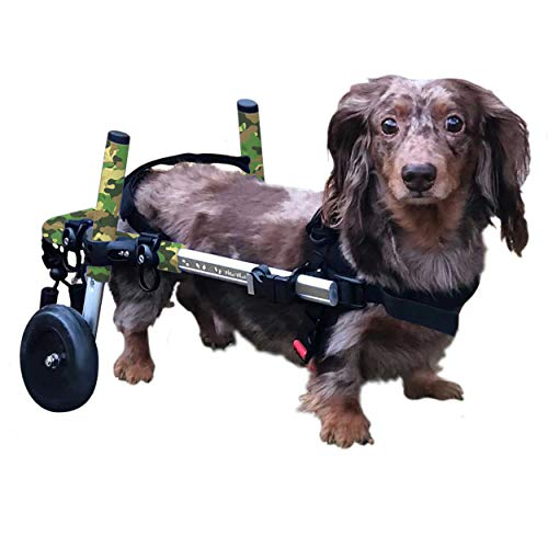 Dachshund Wheelchair - for Small Dogs 2-30+ Pounds - Veterinarian Approved - Dog Wheelchair for Back Legs