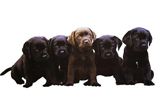 alles-meine.de GmbH großes XL Fensterbild - Hunde Welpen - BEIDSEITIG Bedruckt & selbstklebend - statische Haftung - Wiederverwendbar ! Tattoo Zimmer - Fenstersticker / Fensterbi..