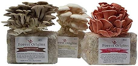 Specialty Trio Mushroom Grow Kit by Forest Origins, Beginner Mushroom Growing Kit, Top Gardening Gift, Unique Gift, Holiday Gift