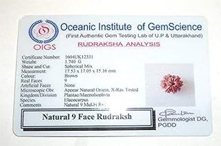 Maaalavya 9 Mukhi Rudraksha with Certificate