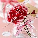 100本/袋カーネーションの種caryophyllus花の種子Semillas鉢植えポットプラント1のためのレアM愛の花