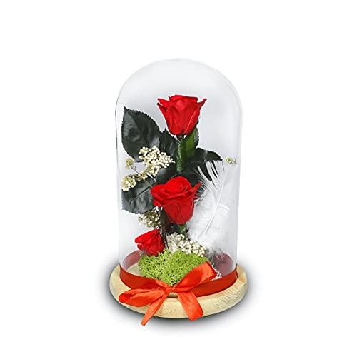 Regalo San Valentin Mujer-Flores preservadas-Peluche de San Valentín-Rosa San Valentin-Rosa preservada Bella y Bestia-Rosa eterna Bella y Bestia (Rojo)