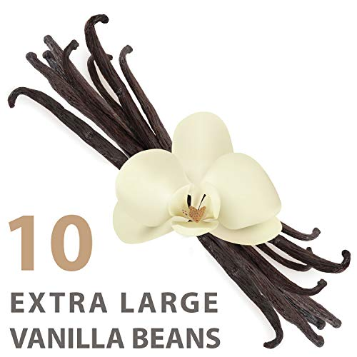 Organic Extra Large Vanilla Beans Grade A1 Gourmet   8quot Inch Length 10 Pack   Perfect for Cooking Baking Extracts   Premium Quality Culinary Aroma Freshness   Ceylon#039s Finest Vanillin