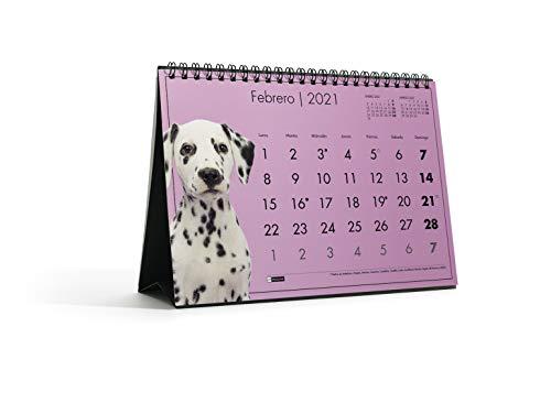 MIQUELRIUS - Calendario de Sobremesa 2021 Perros - Español, A5 210 x 148,5 mm con espacio para escribir y apuntar, un diseño diferente cada mes